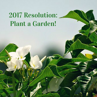 resolution-plant-garden
